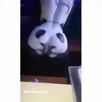 Pandi panda...