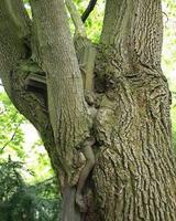 Un calvaire absorbé par un arbre