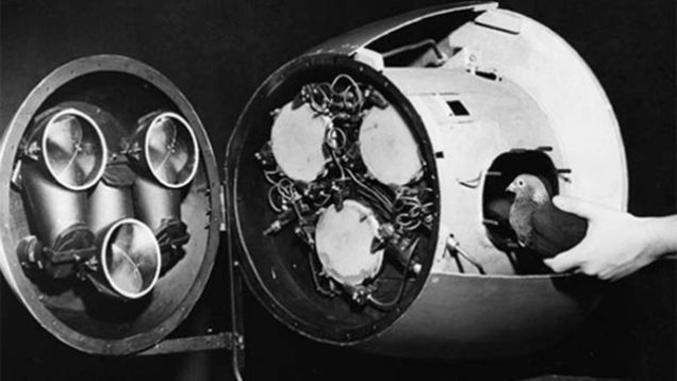 Autre projet militaire américain farfelu, datant de la deuxième guerre. Les scientifiques se sont rendus compte que les pigeons étaient loin d'être cons et qu'on pouvait leur apprendre à reconnaître des objets (en l'occurrence, des bateaux ennemis). En laboratoire, on apprenait donc au pigeon à taper du bec sur une forme de bateau pour obtenir de la nourriture. Ensuite, on mettait trois pigeons dans la tête d'une bombe, devant un petit écran tactile. Le pigeon tapotait sur l'écran à l'endroit où il voyait le bateau et le missile corrigeait automatiquement sa trajectoire. Les trois pigeons servaient à obtenir une meilleur fiabilité.  le projet fut abandonné, les militaires se demandant si les pigeons n'étaient pas au final un peu cons (et réciproquement). Leur crainte étaient que les pigeons n'arrivent pas à faire la distinction entre vaisseaux ennemis et amis. Le projet resta néanmoins dans les tiroirs jusqu'en 1954 parce qu'un missile de ce genre étaient absolument imperméable aux contre-mesures électroniques.