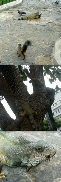 C'est l'histoire d'un pigeon, d'un écureuil et d'un iguane