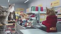 Des chats qui font leurs courses