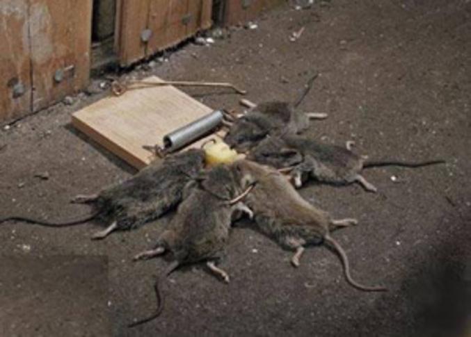 Attraper Les Souris attrape souris