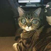 Les chats sont des extraterrestres ! la preuve !