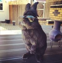 Hype Bunny