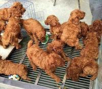 Cuisine du KFC
