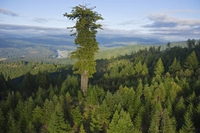 Hyperion, seigneur des arbres
