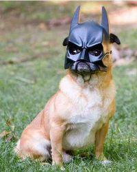 Batdog 3