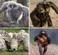 avez vous déjà vu un oiseau qui vient vous péter la gueule ?