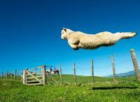 Compter les moutons ou les nuages... ou les deux combinés...