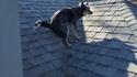 Qui a chié sur le toit ?