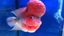 Mars Attack contamine nos amis poissons  ?