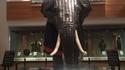 La seule armure d'éléphants connue