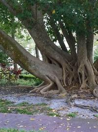 Partouze d'arbres