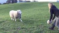 kan t'habites en Nouvelle-Zélande et que tu peux pas avoir de chien