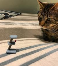 Faire une blague à son chat