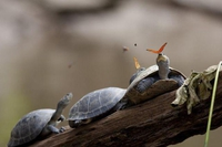 La tortue et le papillon
