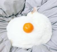 chat blanc + mandarine = oeuf au plat
