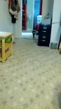 La technique de marche du catwalk