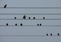 Sonate en merle majeur