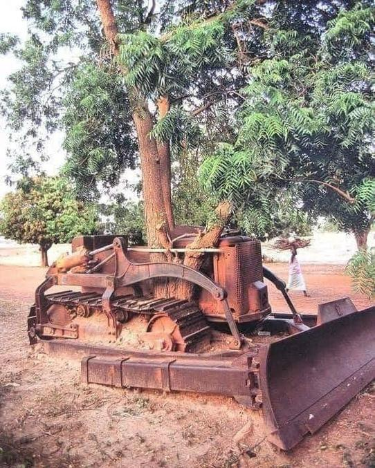 ... mais quel âge peut avoir ce bulldozer ? Peut-être en lien avec la décolonisation, ou bien une opération militaire ponctuelle (troupe du génie) ?  En tout cas l'arbre a été protégé par la carcasse on dirait...