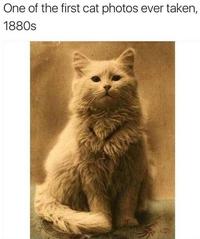 L'une des premières photos de chat