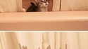 Chaton dans la baignoire