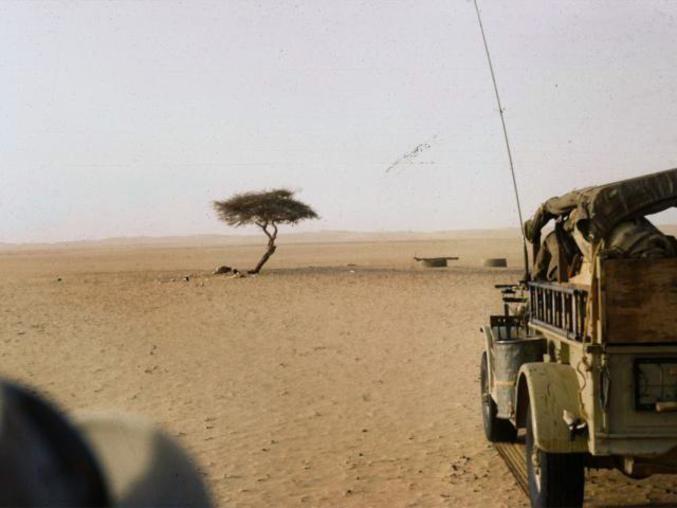 Aussi appelé l'Arbre du Ténéré, cet acacia fût pendant longtemps considéré comme l'arbre le plus isolé du monde (150km de l'oasis la plus proche).  Fait insolite ? Il fût détruit en 1973 lors d'un accident avec un camion. Faut quand même le vouloir...
