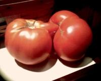 Fuck tomatoes !