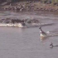 Une terrifiante attaque de crocodile