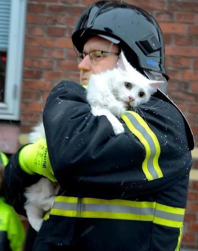 Un chat qui a eu très peur, mais qui est sauvé maintenant.
