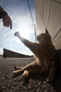 Et Dieu créa le chat.