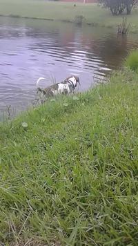 En baladant son chien, ce dernier se fait un ami insolite !