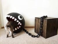 Un chat dans la bouche du chomp