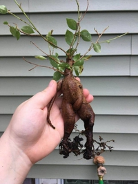 Quand ta plante se fiste toute seule