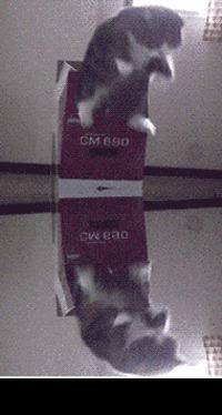 Cat jump loop