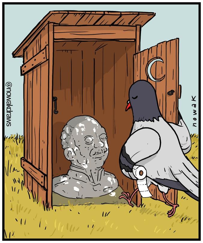 Toilettes pour pigeons