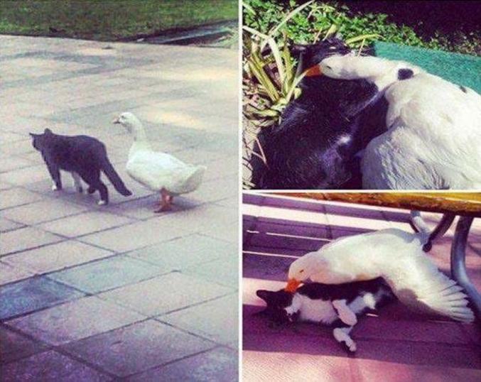 Un chat et une cane blanche.