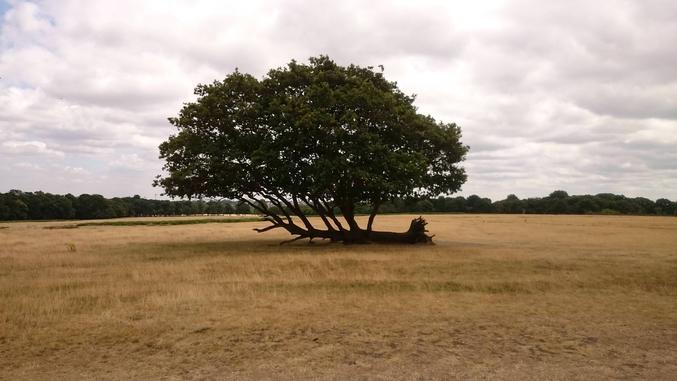 Leçon numéro 2 : être à terre = plus de racines.