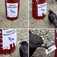 Marre d'être un oiseau ?