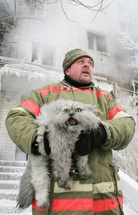 Un pompier sauve un chat