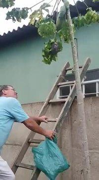 Comme se débarrasser d'un nid de guêpes