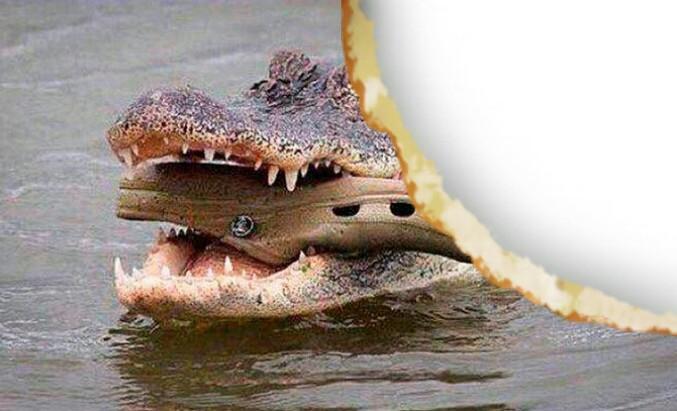 Un croc dans un croco qui se fait croquer