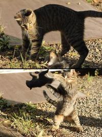 Écureuil vs Chat