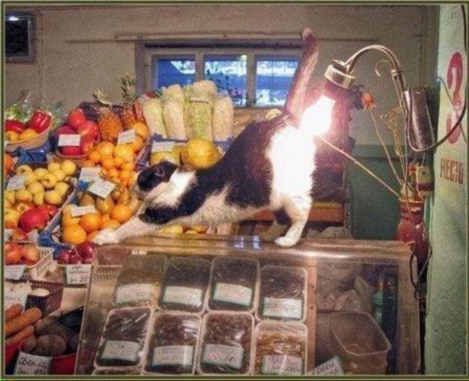 Un chat qui se prélasse sous une lampe