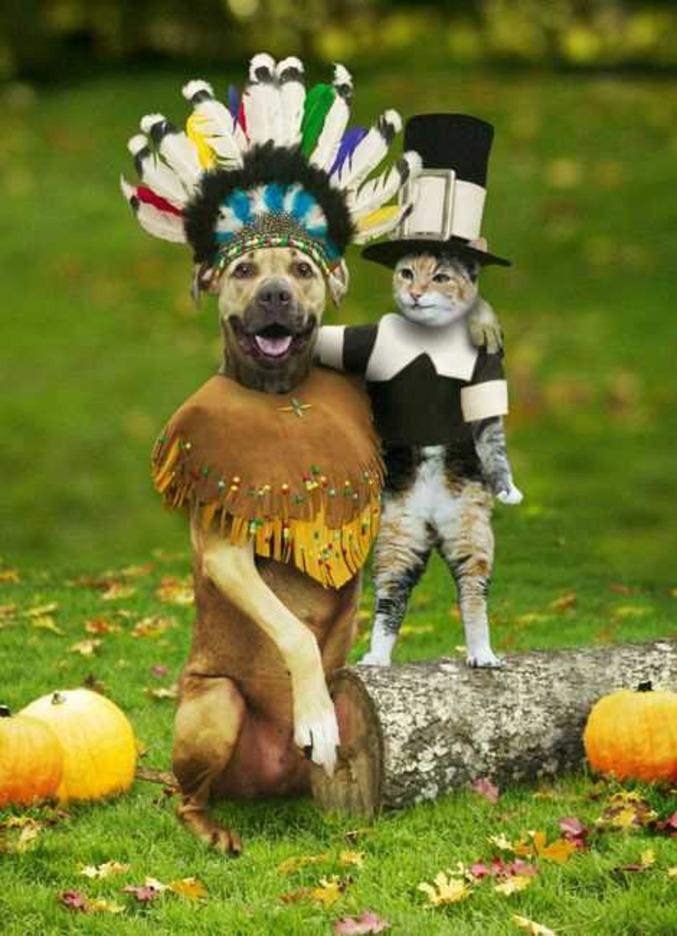 Un chat et un chien déguisés