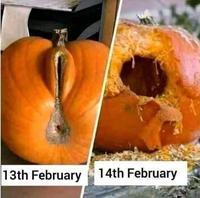 Le 13 février vs le 14 février