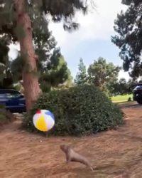 Chien et ballon de plage