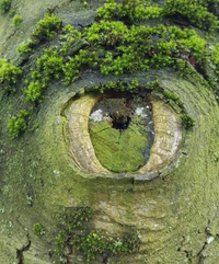 Oeil végétal