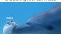Les dauphins et les ballons
