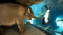 Dans l'Orégon, un éléphant visite son zoo